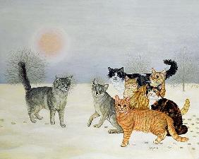 Winter-Cats