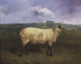 A Prize Ewe with monogram 'H', belonging to Mr J.A. Houblon, Hallingbury Place, Essex