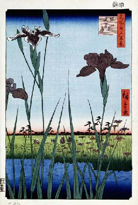 Irises at Horikiri (One Hundred Famous Views of Edo)