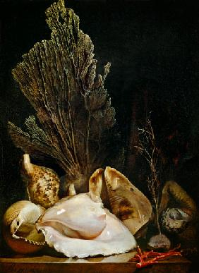 Antoine Berjon - Still Life of Shells and Coral