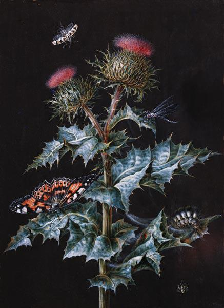 A Study of a Thistle with Insects (gouache)