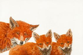 Meet the Foxes