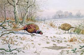 Pheasant and Partridge Eating (w/c on paper)