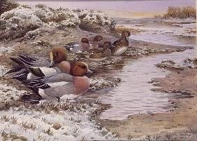 Daybreak on the Washes - Wigeon