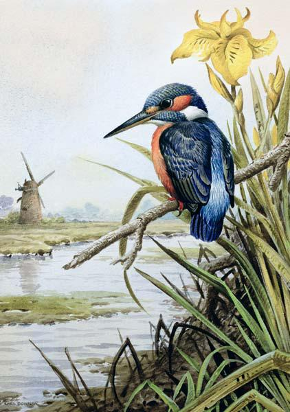 Kingfisher with Flag Iris and Windmill