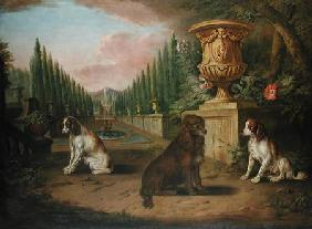 Three Spaniels in a formal garden