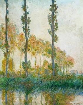 Monet, Claude : Peupliers en automne.