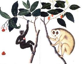 Study of Two Monkeys Hanging from a Branch