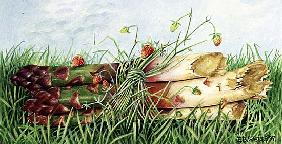 Asparagus Tied with Wild Strawberries, 1997 (acrylic on paper)