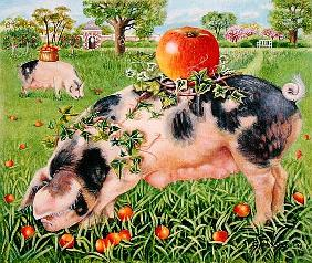 Gloucester Pigs, 2000 (acrylic on canvas)
