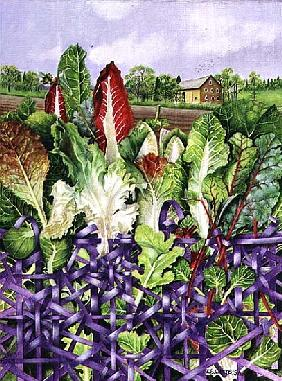 Lettuce Leaves in Purple Wicker, 1996 (acrylic on paper)
