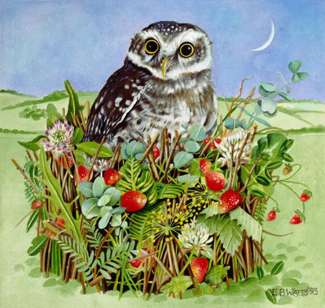 Owl in a Woodland Basket, 1993 (acrylic)