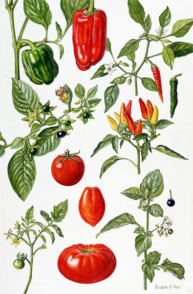 Tomatoes and related vegetables, 1986 (w/c on paper)