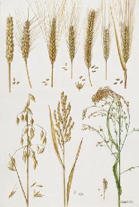 Wheat and other crops (w/c)