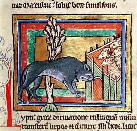 MS Roy 12 C XIX fol.19 A wolf outside a sheep fold, from a bestiary or moralised history, Durham (12