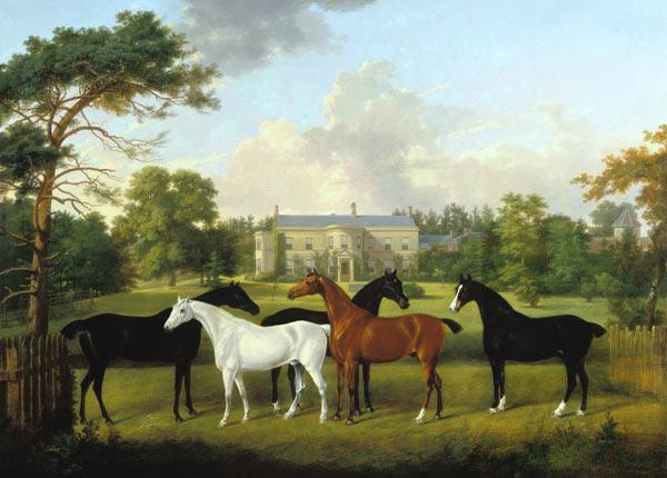 Cinq chevaux de course devant une maison de campagne for Photo campagne anglaise