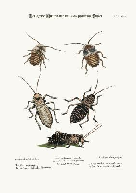 The Greater Cockroach, and the Whistle Insect