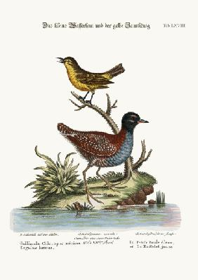 The Least Water-Hen, and the Yellow Wren