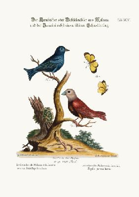 The Malacca Gros-beak, the Jacarini, and the small Yellow Butterfly