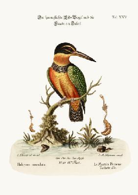 The Spotted Kingfisher