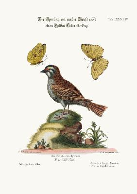 The White-throated Sparrow, and the Yellow Butterfly