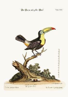 The Yellow-breated Toucan