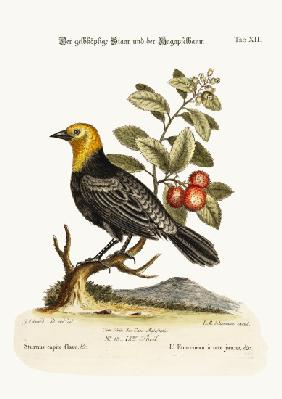 The Yellow-headed Starling. The Arbutus or Strawberry-Tree