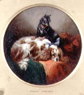 Blenheim Spaniel and Terrier
