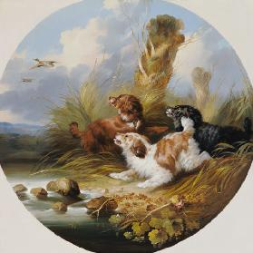 Three Spaniels Flushing Mallard