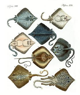 Different kinds of rays