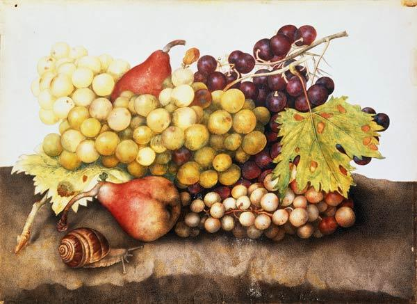 G.Garzoni / Still life with grapes.