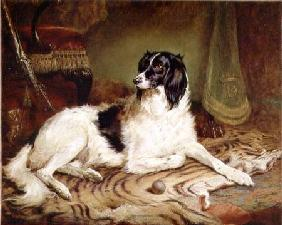 'Minna', a favourite dog of James, Marquess of Dalhousie