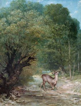 Courbet, Gustave : Witterndes cerf