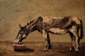 Courbet, Gustave : The Donkey