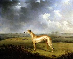Reverend Henry Bate Dudley's Greyhound 'The Miller'