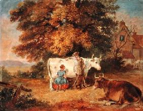 Rural Scene with Cows