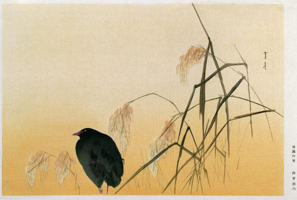 Blackbird, Edo Period (silk scroll)