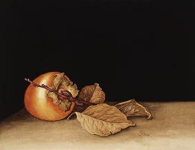 Persimmon, 2004 (w/c on paper)