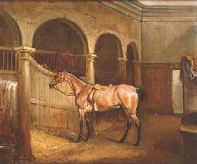 Lord Villiers' Roan Hack in the Stables at Middleton Park