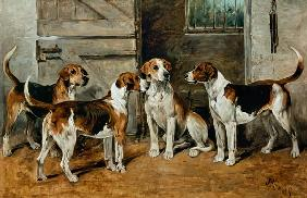 Study of Hounds