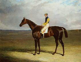Mr. M. Stanley's 'Crutch' on Newmarket Heath