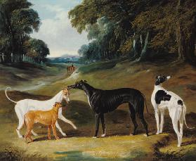 Greyhounds, 'Spot', 'Skylark', 'Nettle' and 'Sky'