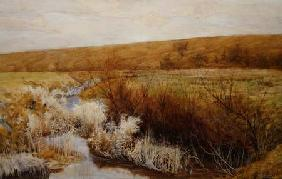 A Meadow in Winter