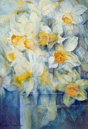 Spring Time, mixed daffodils in tank No 3., Mrs Krelage, Ice Follies and Fortune