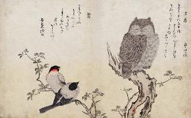 An Owl and two Eastern Bullfinches, from an album 'Birds compared in Humorous Songs, Contest of Poet
