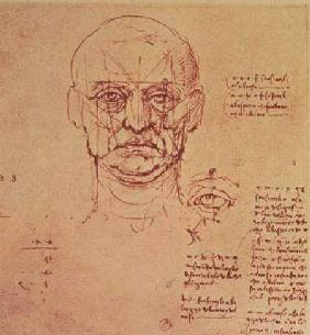 Drawing of the proportions of the head and eye