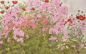 Pink Phlox and Poppies with a Butterfly (w/c on paper)