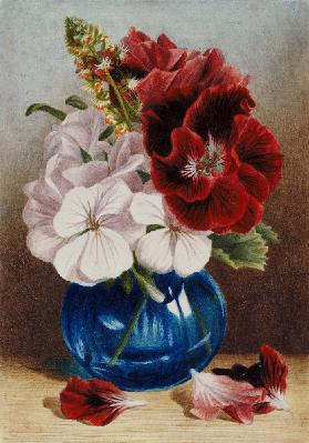 Claret and White Pelargoniums in a Blue Vase