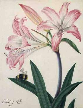Lilium Belladonna and Bee