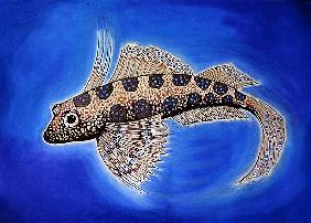 Dragonet Fish, 1999 (woodcut print and mixed media)